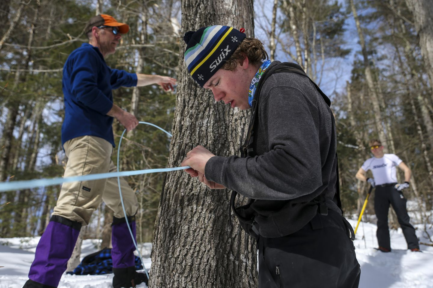 Ben Ogden, 19, works on a maple line while his father, John Ogden (left), instructs Matias Ovrum, 19, in Londonderry, VT on Tuesday afternoon.
