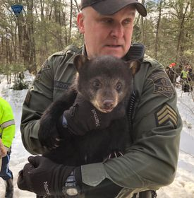 A state Environmental Police officer with one of the cubs.