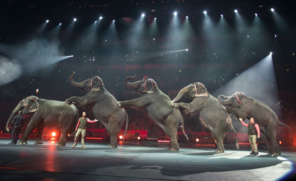 Elephants perform at the Ringling Bros. and Barnum & Bailey Circus in Tampa.