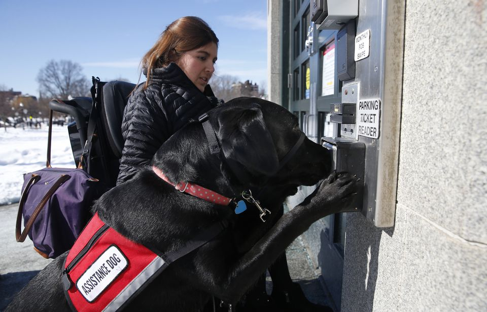 Carolyn Barrett's service dog, Shadow, pressed the button to open an automated door.