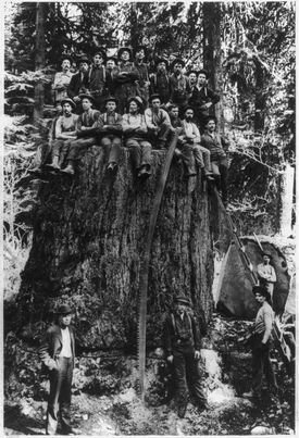 Businesses dependent on wood became major employers. In the Pacific Northwest there was a great need for loggers, who cut trees and helped float logs to market. market.