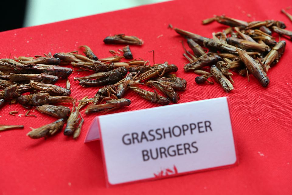 Grasshoppers were displayed on a table.